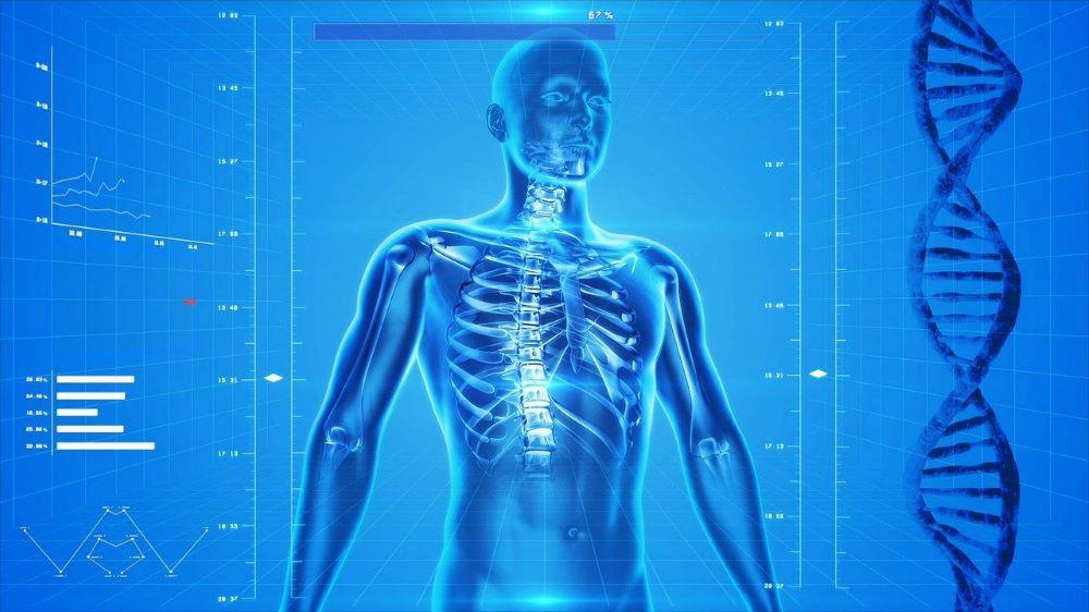 human-skeleton-xray